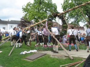 Die Turner und Volkstänzer stellen den schweren Maibaum an Rathausplatz Klosterneuburg händisch auf.